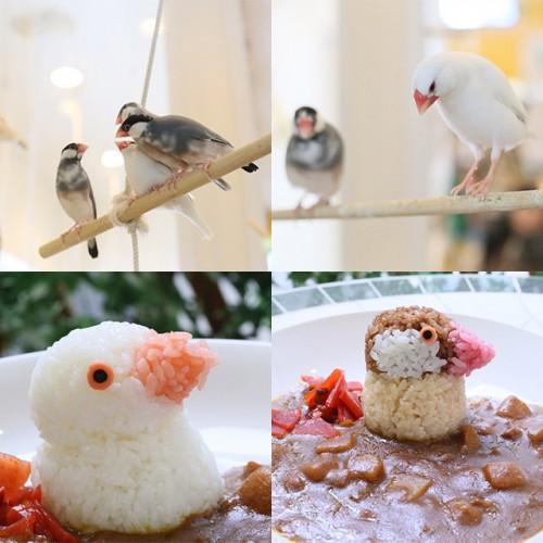 文鳥の日記念♪ことりカフェ秋の文鳥まつり