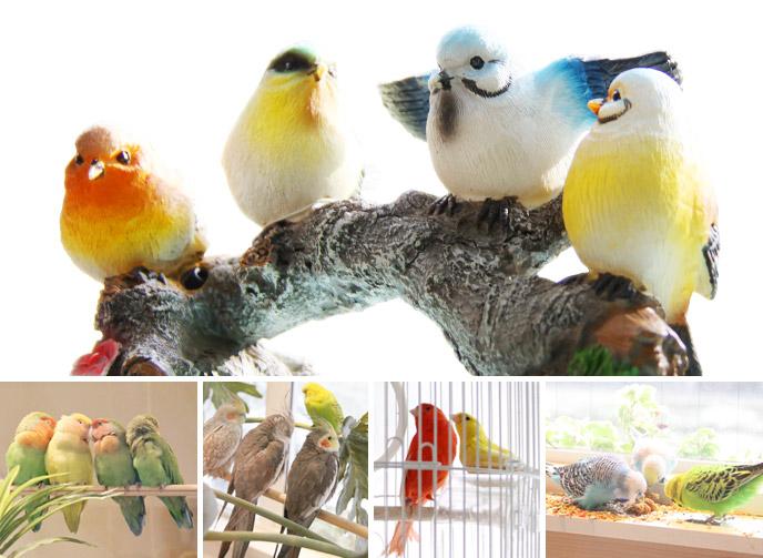 セキセインコなどの小鳥スタッフ