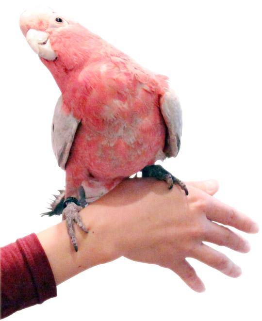 ことりカフェ表参道の鳥への想い