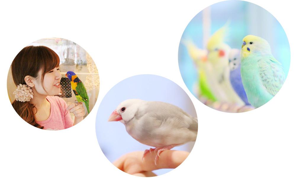 オカメインコやコザクラインコなど愛らしい鳥達