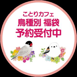 ことりカフェ鳥種別福袋 予約受付中!