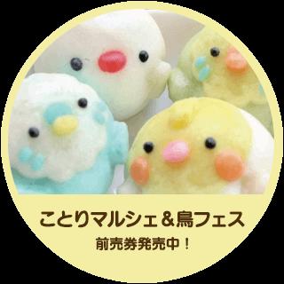 ことりマルシェ&鳥フェス前売券発売中!