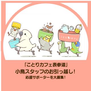 「ことりカフェ表参道」小鳥スタッフのお引っ越し!応援サポーターを大募集!!