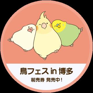 鳥フェス in 博多 2021 開催!